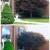 Tree Top Tree Trimming