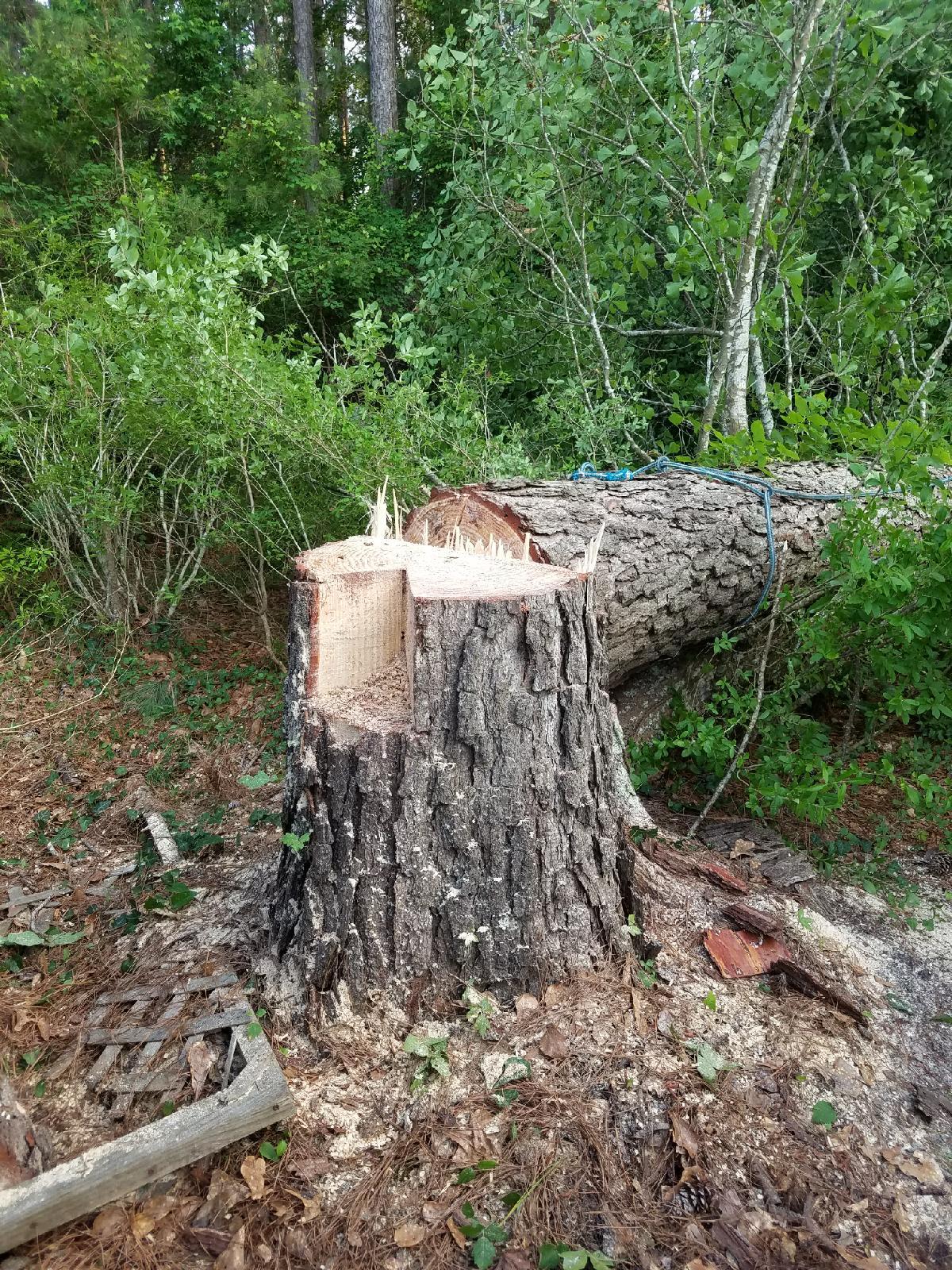 Leo & Sons Tree Service & Stump Grinding Newport NC YP
