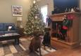 Guntersville Animal Hospital - Guntersville, AL. The girls.  Christmas 2018