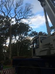 DC Tree Service