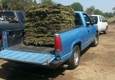 Valley Sod Farm Inc. - North Hills, CA