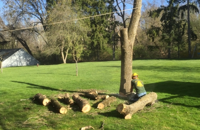 All Seasons Tree Care, Inc. - Bethlehem, PA. Cutting up the pieces.