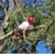 Craig Ross Tree Service