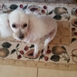 Doggie Stylez Pet Salon - Midland, TX