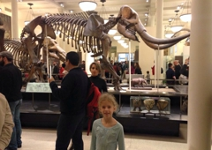 American Museum of Natural History - New York, NY