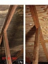 Before / After Attic Mold Remediation