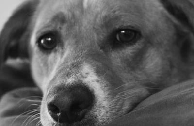 Animal Care Service Inc - Saint Louis, MO