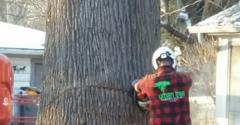 Treestuff.com - Indianapolis, IN