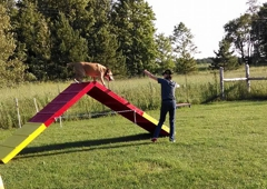 Thunder Paws K-9 Training and Boarding Kennels - Cooks, MI