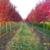 McConnell's Christmas Tree Farm