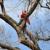 American Eagle Tree Service LLC