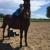 Nova Quarter Horses Inc