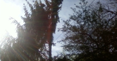 Doyle's tree service - Dayton, OH
