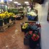Compo Farm Flowers