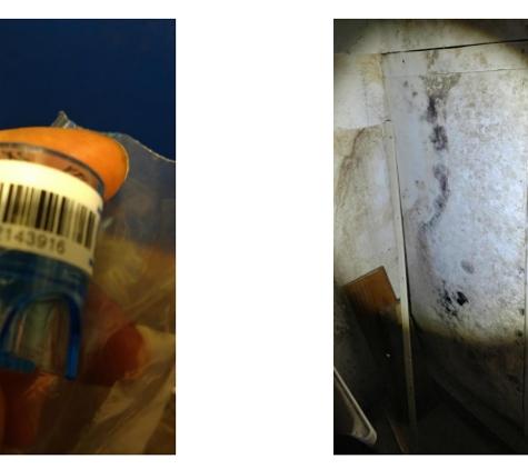 Mold Inspection & Testing Los Angeles CA - Los Angeles, CA