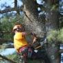 Atomic Tree Service