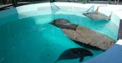 Miami Seaquarium - Key Biscayne, FL