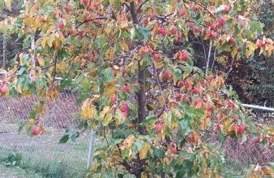 Northern Fruits & U-Pick - Palmer, AK. Apples, anyone?
