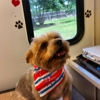 Harts Mobile Dog Grooming