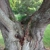 LC's Tree Service & Freelancing