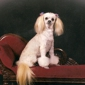 Prim 'n Proper Pet Styles by Beebe - Maryville, TN