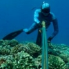 Maui Sporting Goods Spearfishing Specialties