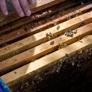 Florida Bee Removal, Inc.