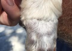 The Works Dog Grooming - Ocala, FL