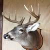 Rustic Oaks Ranch Taxidermy