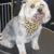 Furrever Friends Pet Boutique & Grooming Salon