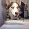 Olivers Dog Cat Clinic