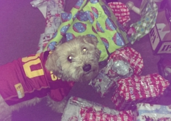East Valley Animal Shelter - Van Nuys, CA. Another wonderful rescue dog celebrates the holidays.