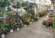 Moneta Nursery Inc. - Gardena, CA