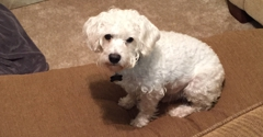 The Puppy Den - Daphne, AL