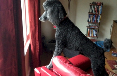 Cleverdog Daycare Grooming and Boarding - Silver Spring, MD
