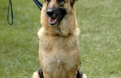Hollywood Dog Training School - North Hollywood, CA