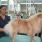 Best Friends Pet Care - Gaithersburg, MD