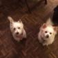 Barkin Basement Pet Grooming - Orange, MA