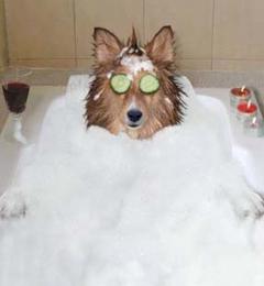 Soggy dog do it yourself pet wash 910 main ave de pere wi 54115 soggy dog do it yourself pet wash de pere wi solutioingenieria Gallery
