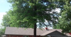 Best of the Best Tree Service - Tulsa, OK