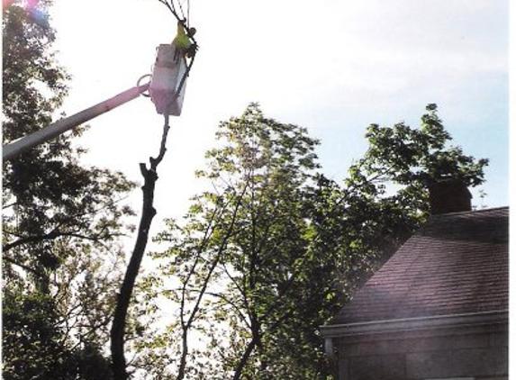 Cincinnati Tree Care - Harrison, OH