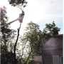 Cincinnati Tree Care
