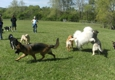 Spring Valley Farm Dog Care - Pisgah Forest, NC