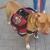 D&K Pet Training