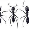 Southtowns Pest Control