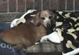 Fox Nest Veterinary Hospital - Seneca, SC. Punky loves Dr.Ross and all of the FoxNest staff����