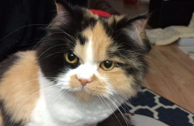 Elkhorn Veterinary Clinic Ltd. - Elkhorn, WI. My Princess, Miss  AbbyLynn ����