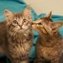 El Paso Animal Emergency & Veterinary Specialty Center - El Paso, TX