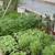 Gilmore's Greenhouse Florist