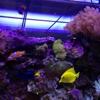 Hooked On Reefs